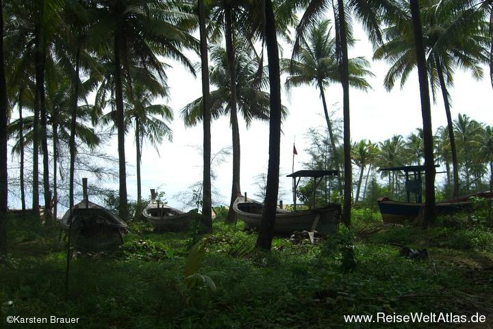 Boote im Palmenwald