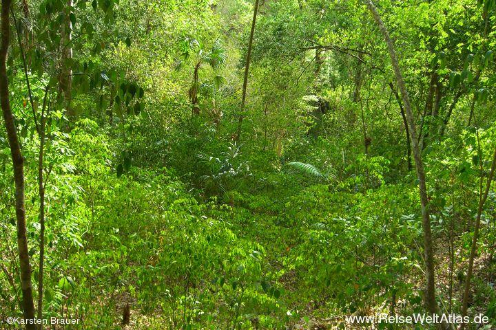 Das Grün des Regenwaldes