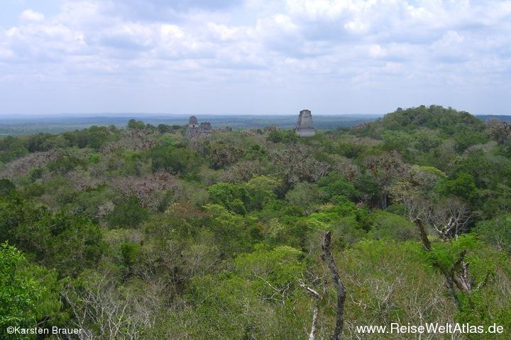 Der Regenwald von Peten