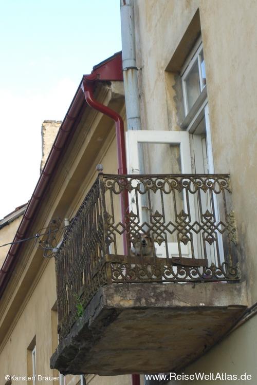 Hund auf dem Balkon