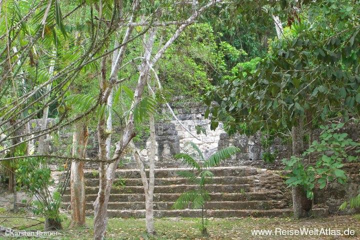 Jahrhunderte alte Stufen in den Regenwald