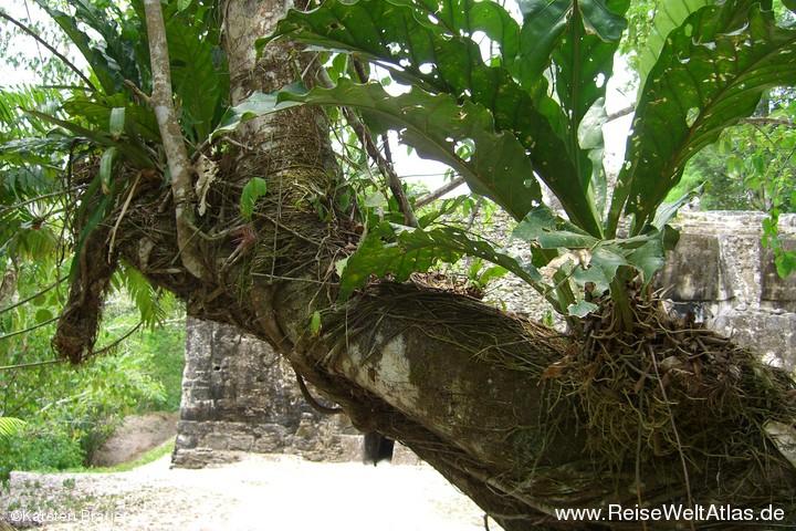 Leben auf dem Baumstamm