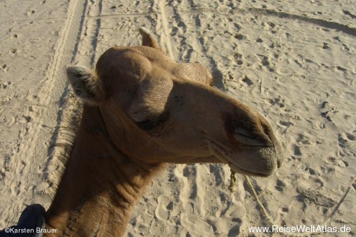 Mein Kamel und Ich