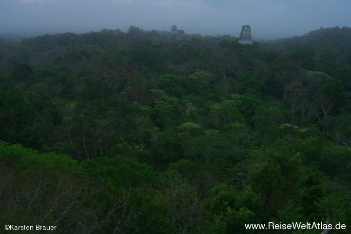 Morgens im Dschungel