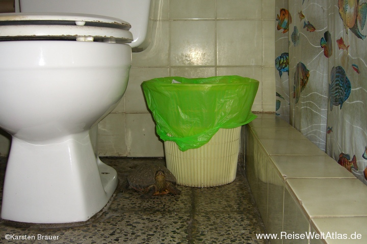 Toilettenkröte