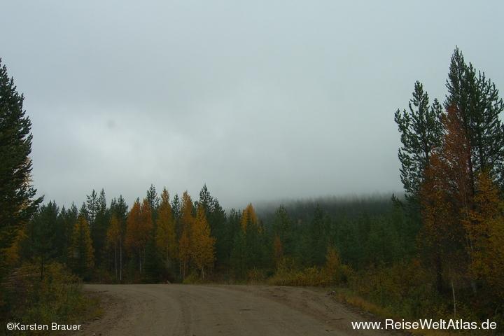 Wolkenwälder